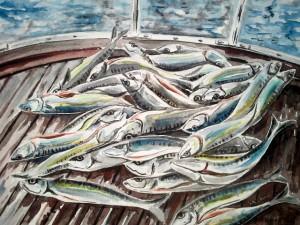 Makrelen an Bord im Skagerak